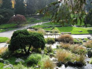 Chinese garden Torino